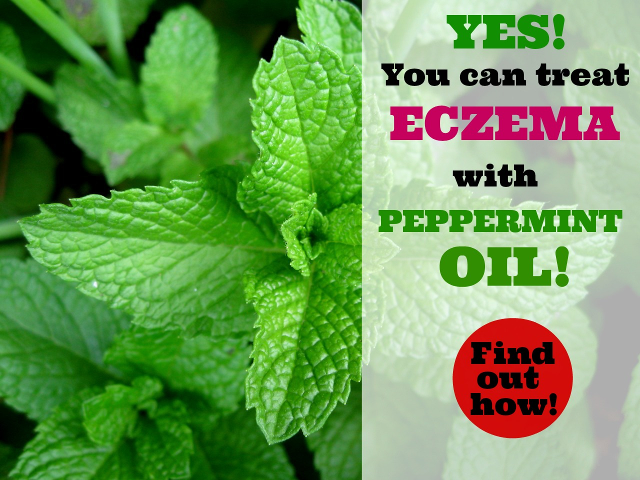 peppermint-for-eczema