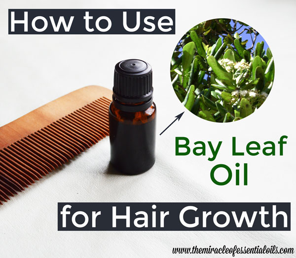 bay essential oil for hair growth