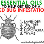 5 Most Effective Essential Oils for Bed Bugs