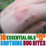 Top 10 Essential Oils for Bug Bites