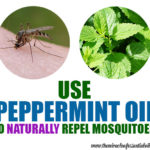 Peppermint Oil for Mosquitoes | Natural Repellent