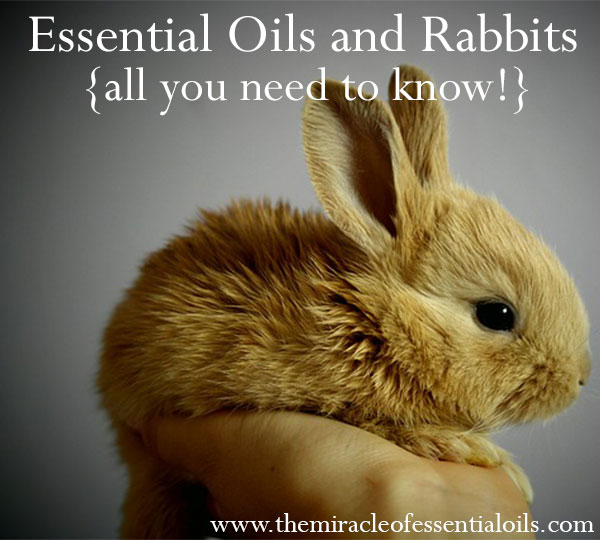 What Essential Oils Are Safe for Rabbits?