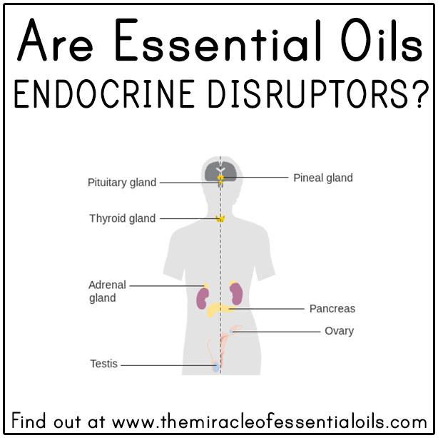 Are Essential Oils Endocrine Disruptors The Miracle Of Essential Oils