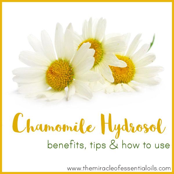 matricaria chamomilla essential oil pdf