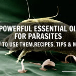3 Powerful Essential Oils for Parasites & 2 Ways to Use them