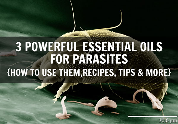 3 Powerful Essential Oils For Parasites 2 Ways To Use Them The