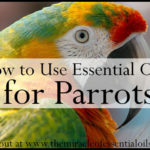 How to Use Essential Oils for Parrots