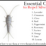 10 Essential Oils for Silverfish Extermination
