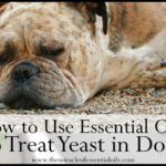 7 Essential Oils for Yeast in Dogs