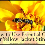 10 Soothing Essential Oils for Yellow Jacket Stings