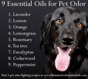 9 Refreshing Essential Oils for Pet Odor