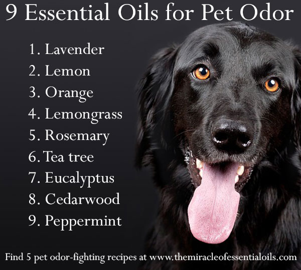 Essential Oils For Pet Odor