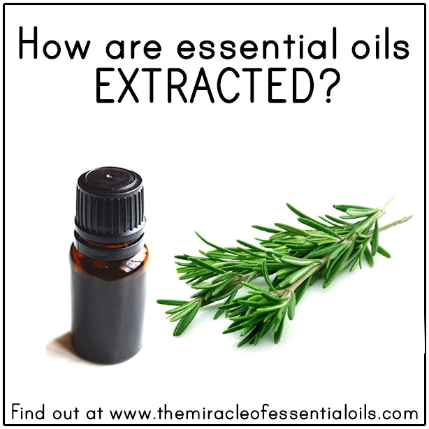 Top 10 List of Rare Essential Oils - The Miracle of