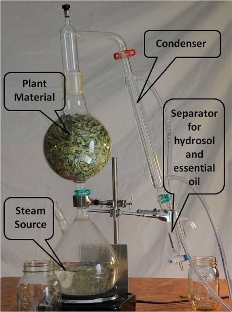 extraction of clove oil using steam distillation Free essay: steam distillation - clove oil abstract: in this experiment, a situ method steam distillation was performed and essential oils were isolated from once the oils were obtained, extraction techniques were used to extract a crude, eugenol, and acetyleugenol product sample.