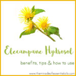 Elecampane Hydrosol Benefits, Tips & How to Use