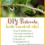 Homemade Essential Oil Pesticide