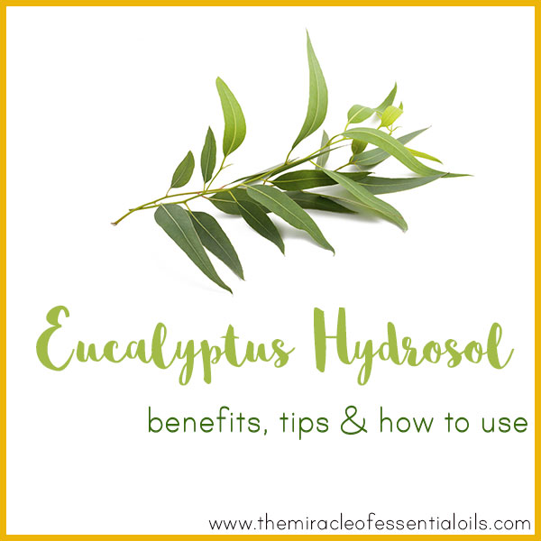 Eucalyptus Hydrosol Benefits, Tips & How to Use