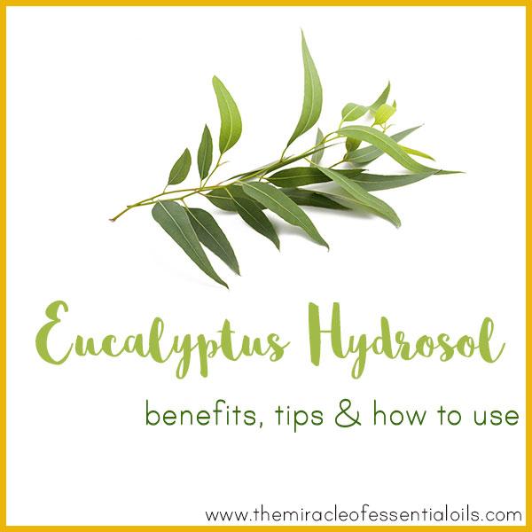 eucalyptus hydrosol benefits