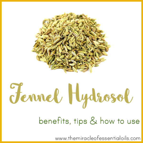 7 Fennel Hydrosol Benefits, Tips & How to Use