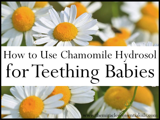 German Chamomile Hydrosol for Teething