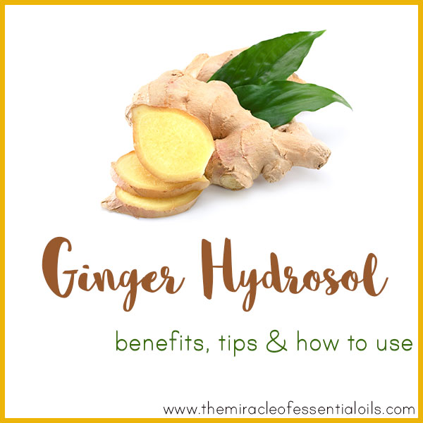 ginger hydrosol benefits