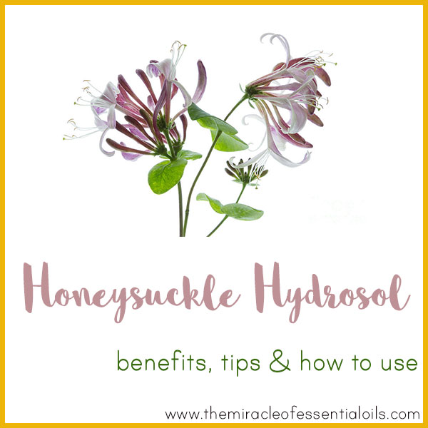 honeysuckle hydrosol benefits