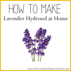 How to Make Lavender Hydrosol at Home