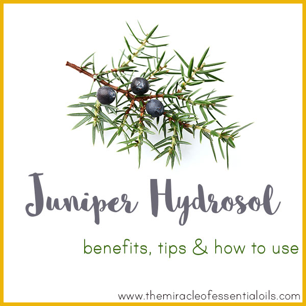 Juniper Hydrosol Benefits, Tips & How to Use