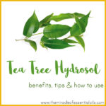 Tea Tree Hydrosol Benefits, Tips & How to Use