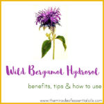 Wild Bergamot Hydrosol Benefits, Tips & How to Use
