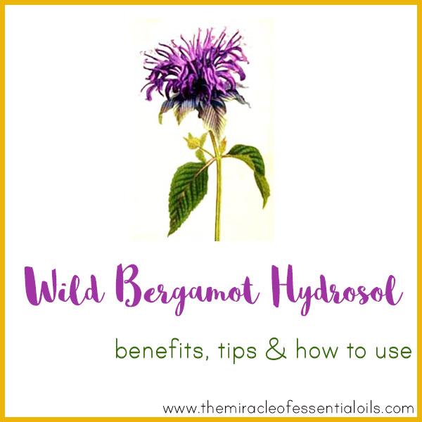 wild bergamot hydrosol benefits
