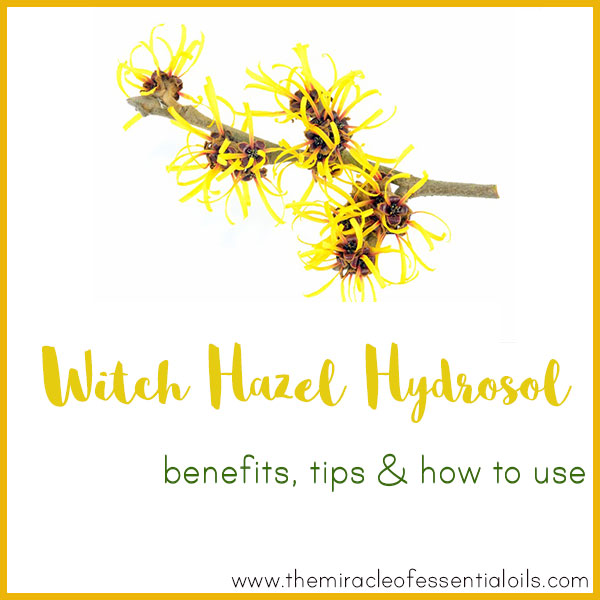 witch hazel hydrosol benefits