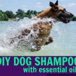 DIY Essential Oil Dog Shampoo | Natural & Safe