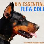 DIY Essential Oil Flea Collar