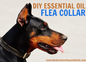 DIY Essential Oil Flea Collar