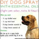 DIY Essential Oil Dog Spray