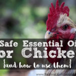 Top 7 Essential Oils for Chicken Care & How to Use