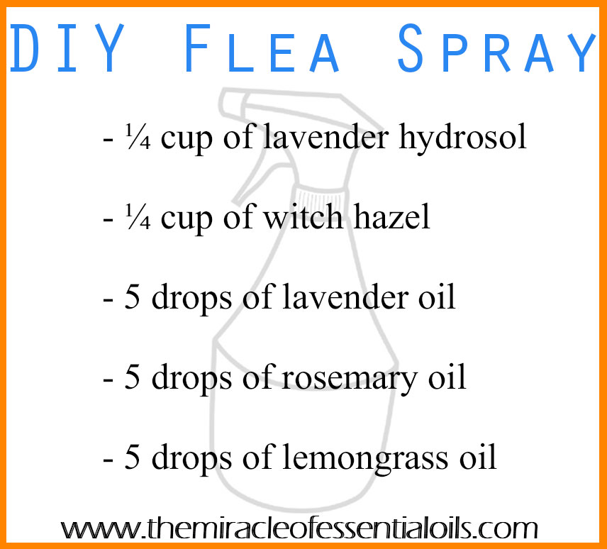 DIY Essential Oil Flea Spray