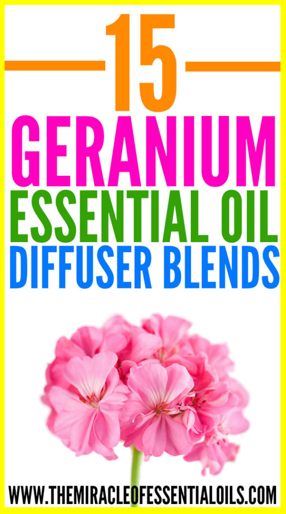 Enjoy these 15 best geranium essential oil diffuser blends for a healthy mind and body!