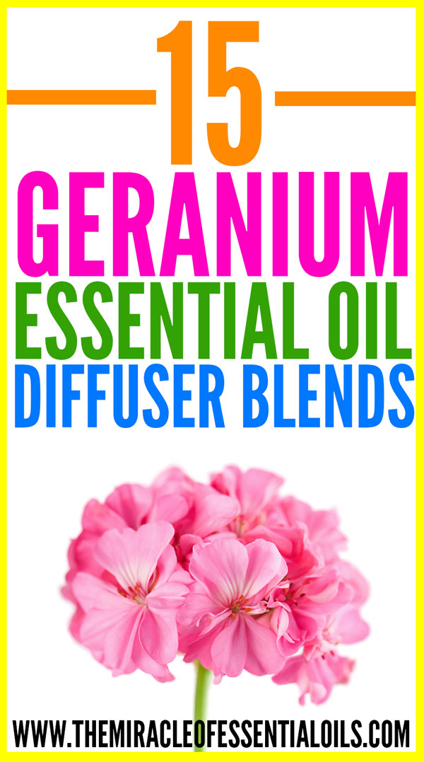 15 Best Geranium Essential Oil Diffuser Blends The