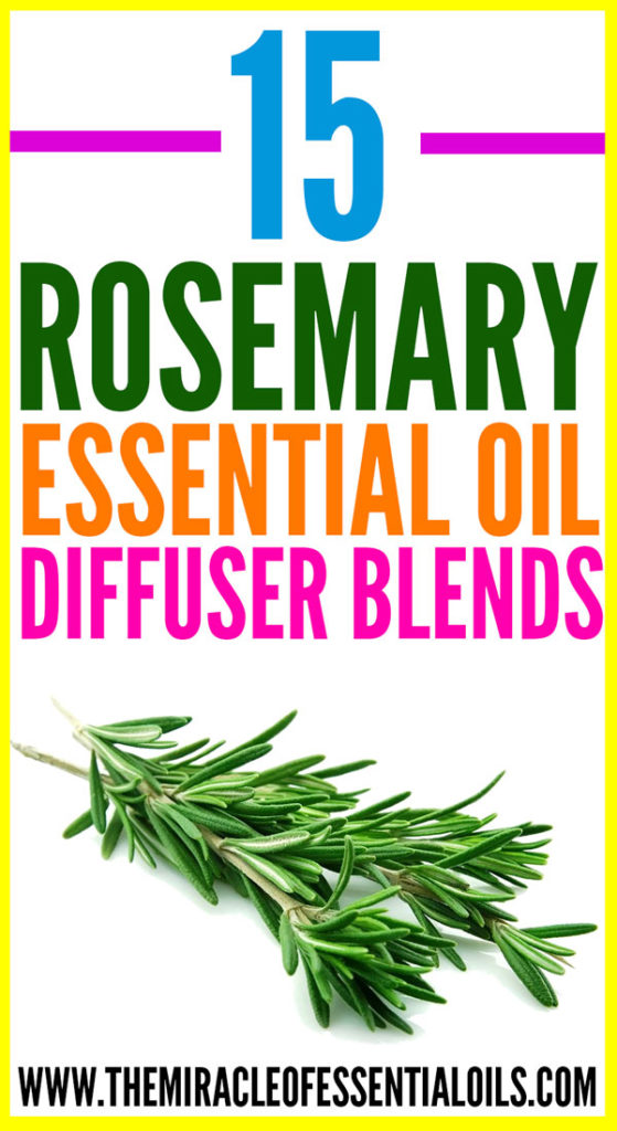 Enjoy 15 best rosemary essential oil diffuser blends for a sharp and healthy mind plus much more!